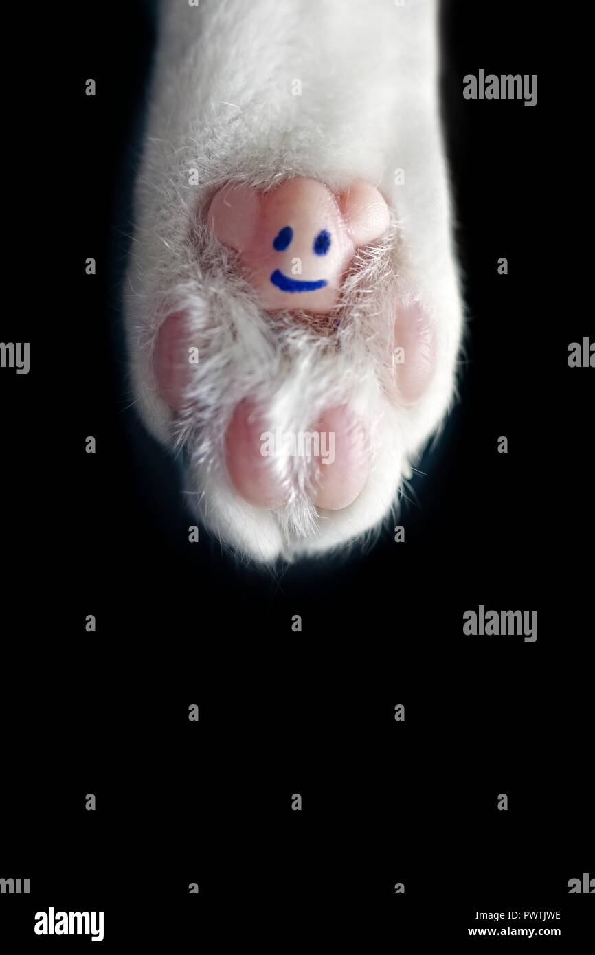 Funny paw of a cat  - isolated on black background. - Stock Image