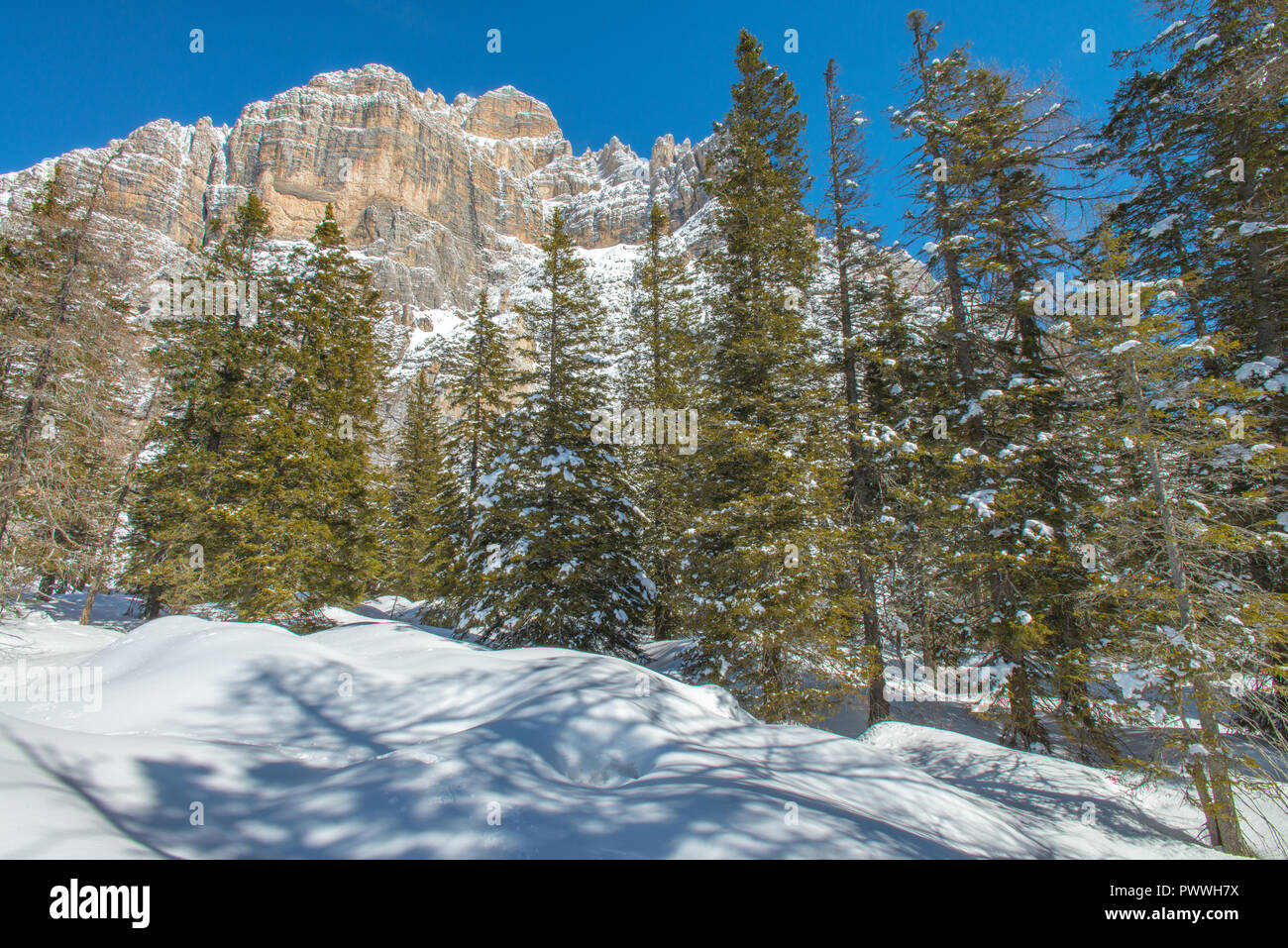 Moiazza mountain south face exposed to the sun in a cloudless winter day. Lots of fresh snow on the ground, great snowshoeing in the forest. - Stock Image