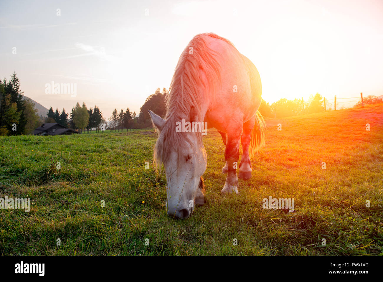 horses That past freedom at sunset - Stock Image