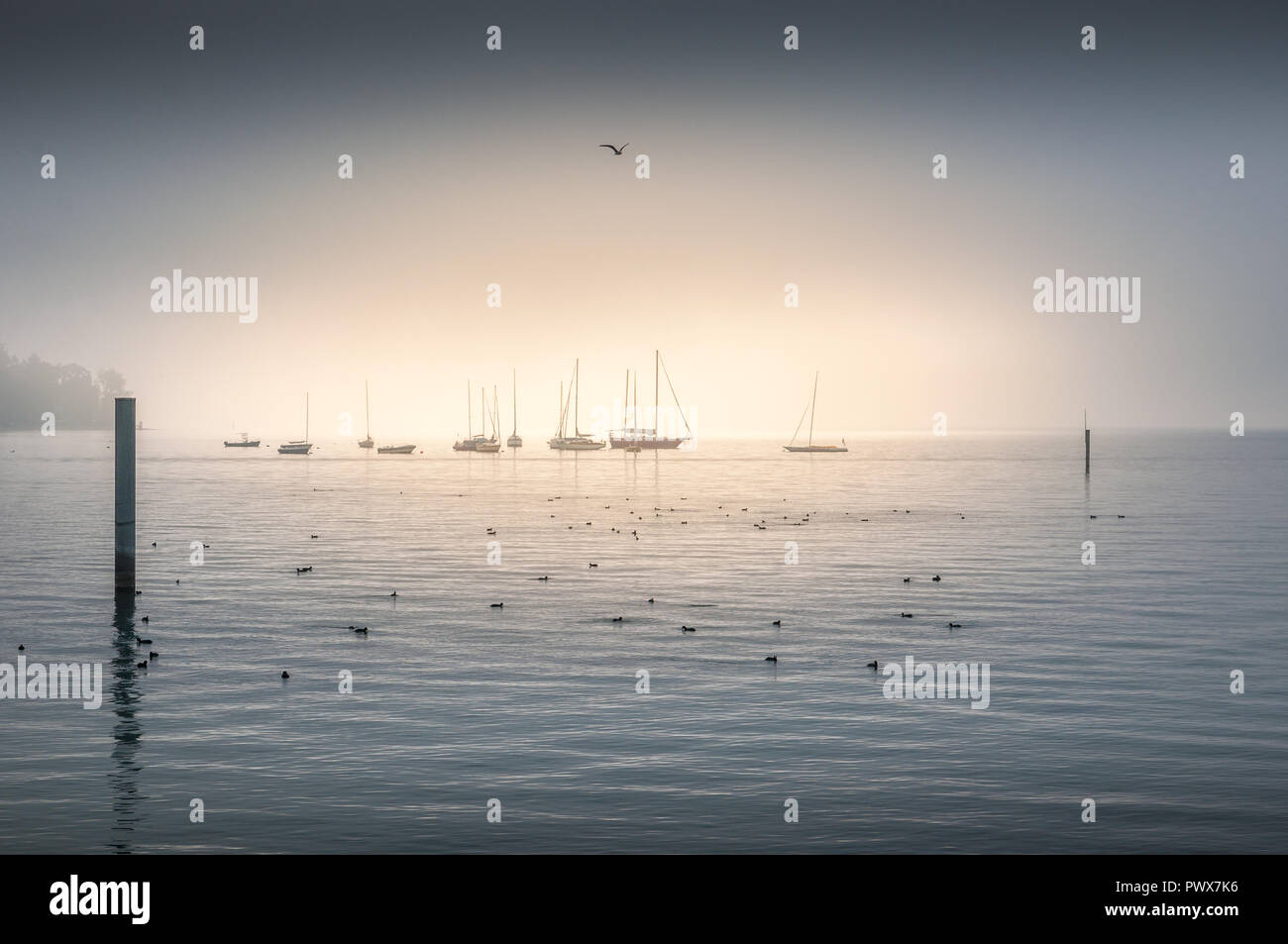 Seabirds floating on the ocean with shipping fleet on the horizon in the background in a central highlight - Stock Image