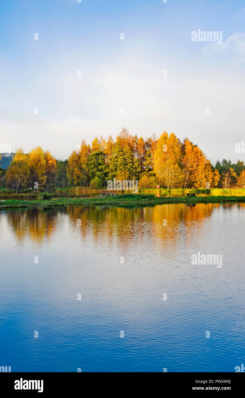 Late afternoon autumn sunshine on trees reflected in lake at Rothiemurchus Fishery, by Aviemore, Cairngorms National Park, Scottish Highlands Scotland - Stock Image