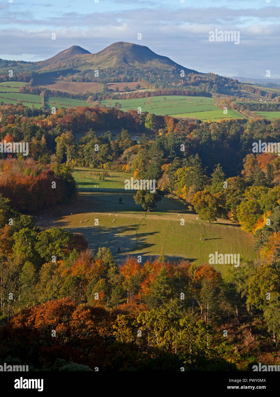 Scott's View, Melrose, Scotland, UK. 18 October 2018. UK Weather, glorious sunshine highlighting the  autumnal foliage looking towards the Eildon Hills after a frosty start in Scottish Borders, temperature of 7 degrees. - Stock Image