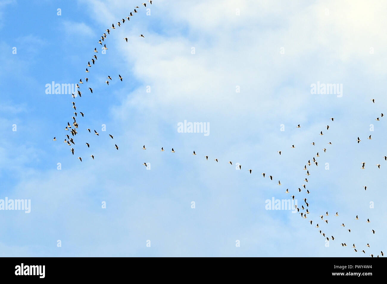 Kinross, Scotland, United Kingdom, 18, October, 2018. Migrating geese fly over Loch Leven on a fine autumn day. © Ken Jack / Alamy Live News - Stock Image