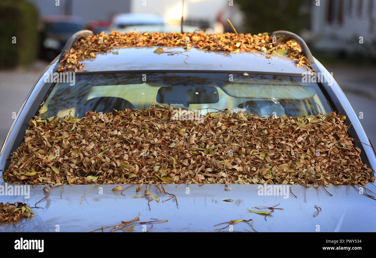 18 October 2018, Bavaria, Kaufbeuren: Covered with autumn leaves is the windscreen of a parked car. Photo: Karl-Josef Hildenbrand/dpa - Stock Image