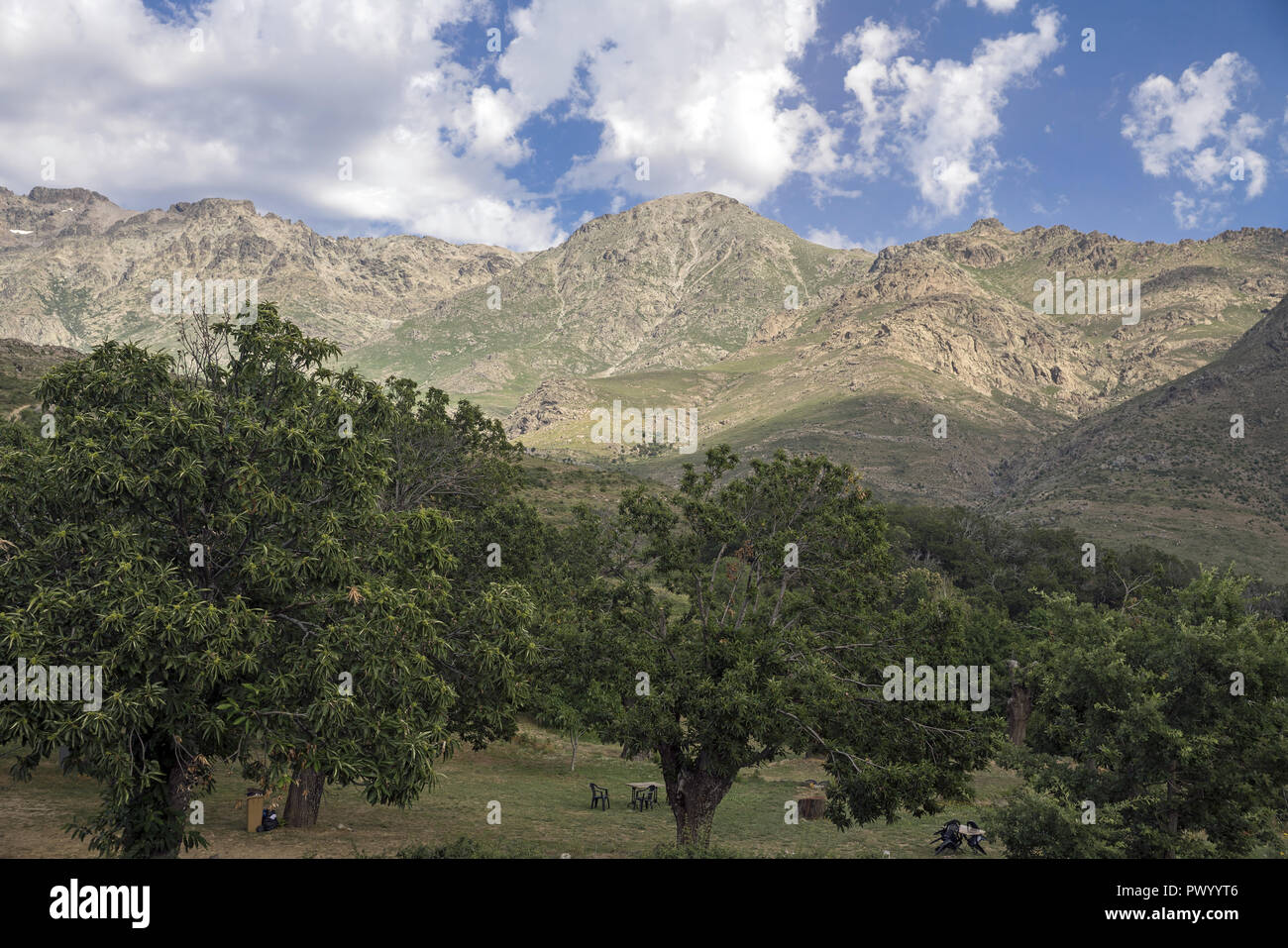 A chestnut orchard on the background of mountains. Massif Monte Cinto, the highest mountain in Corsica (2706 m). Masyw Monte Cinto, najwyższa góra. - Stock Image