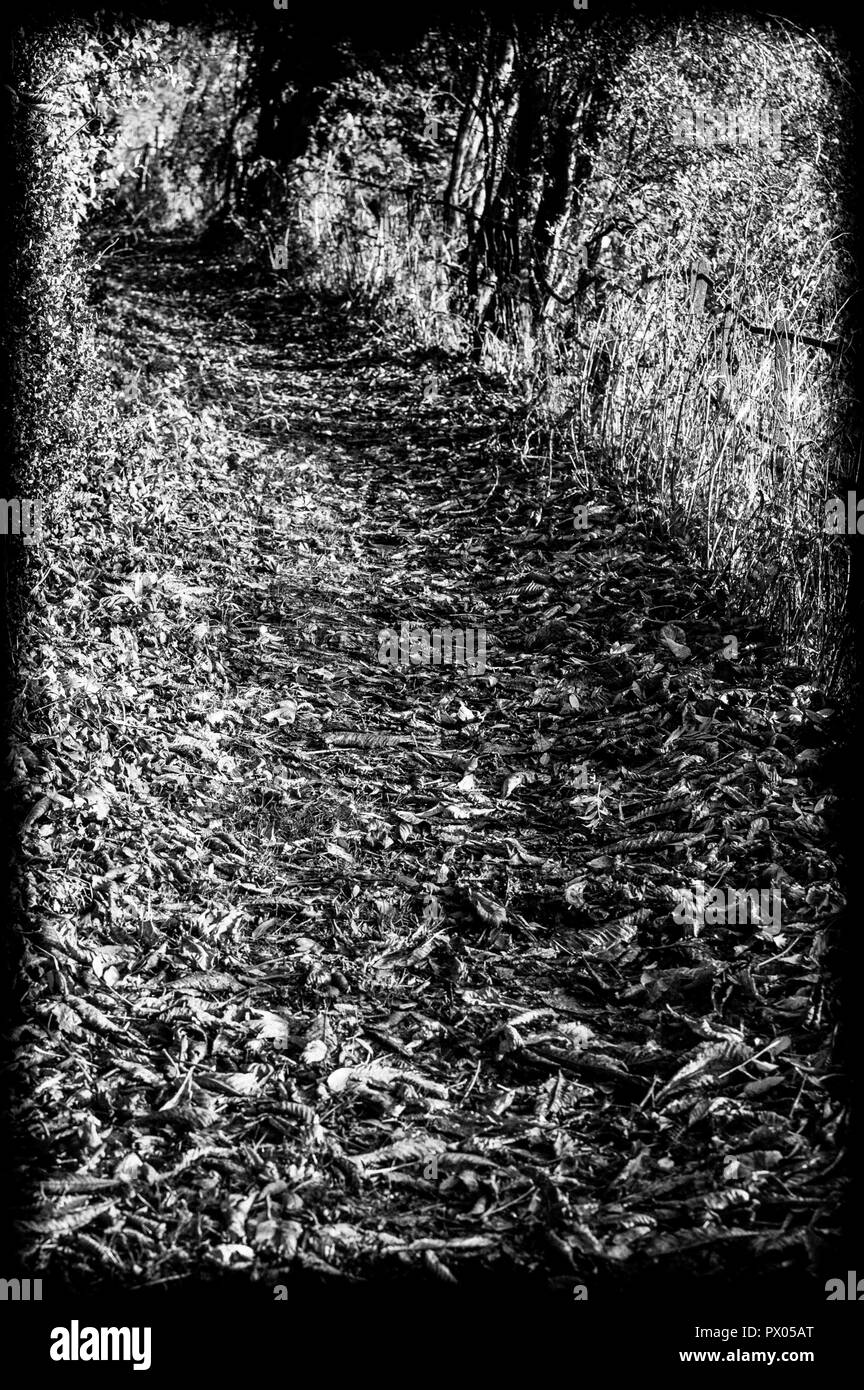 Monochromatic view of country footpath covered in autumn leaves. - Stock Image