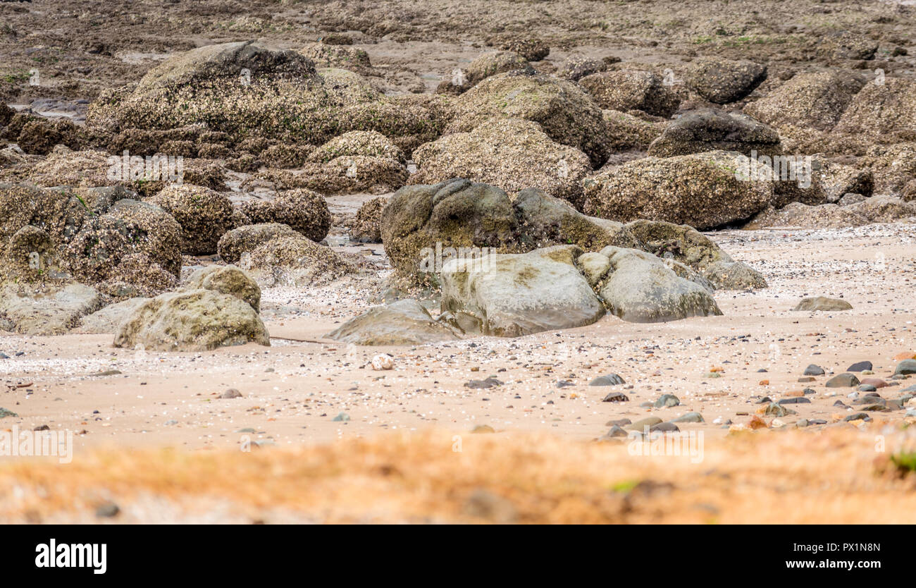 Rocks on a beach exposed during low tide - Stock Image