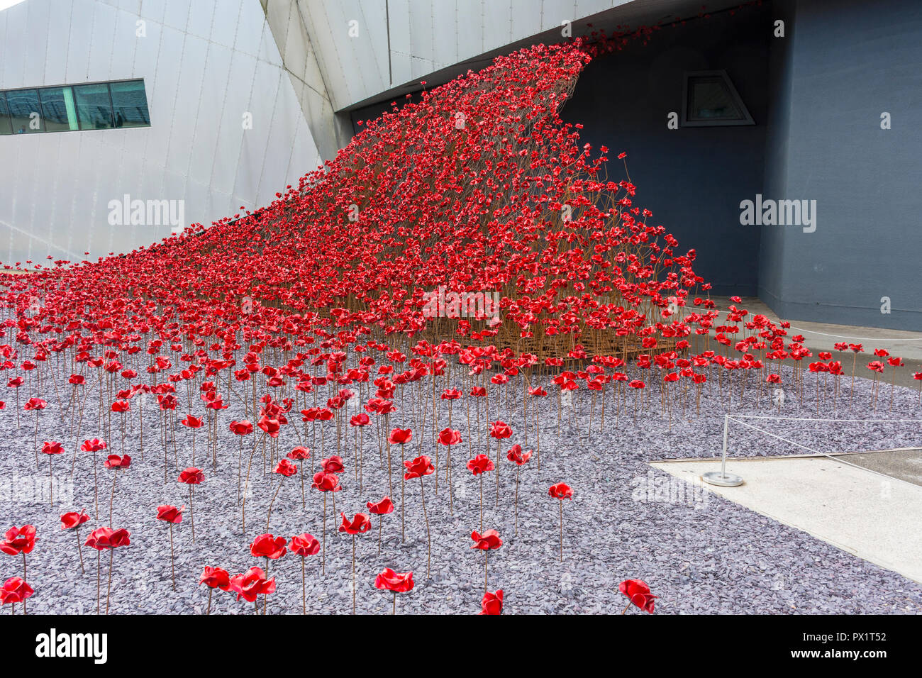 Poppies: Wave, by Paul Cummins and Tom Piper, at the Imperial War Museum North, Salford Quays, Manchester, UK - Stock Image