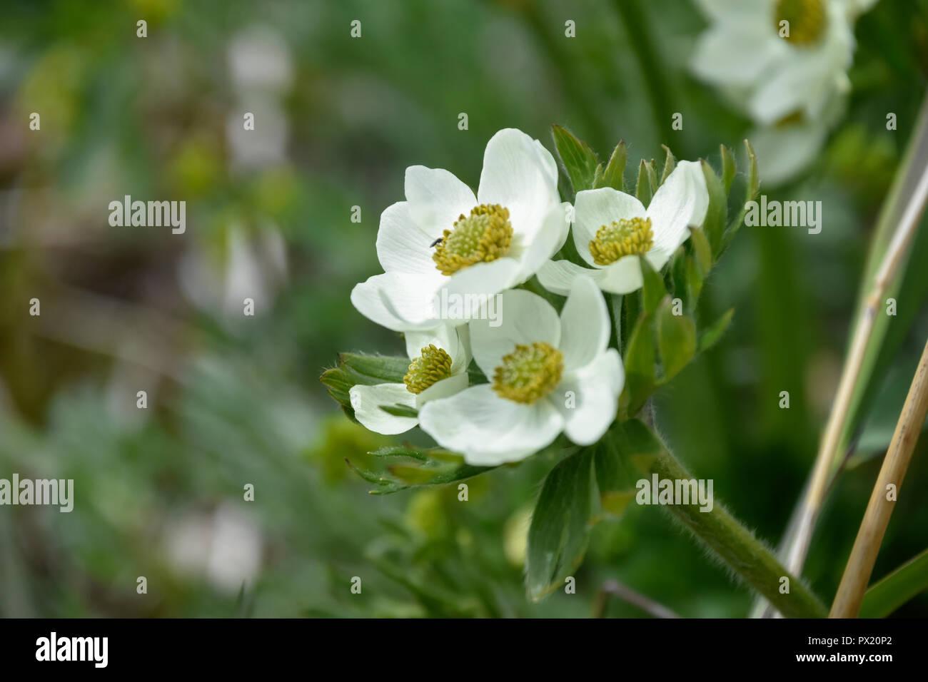 White flowers stock photo 222549994 alamy white flowers mightylinksfo