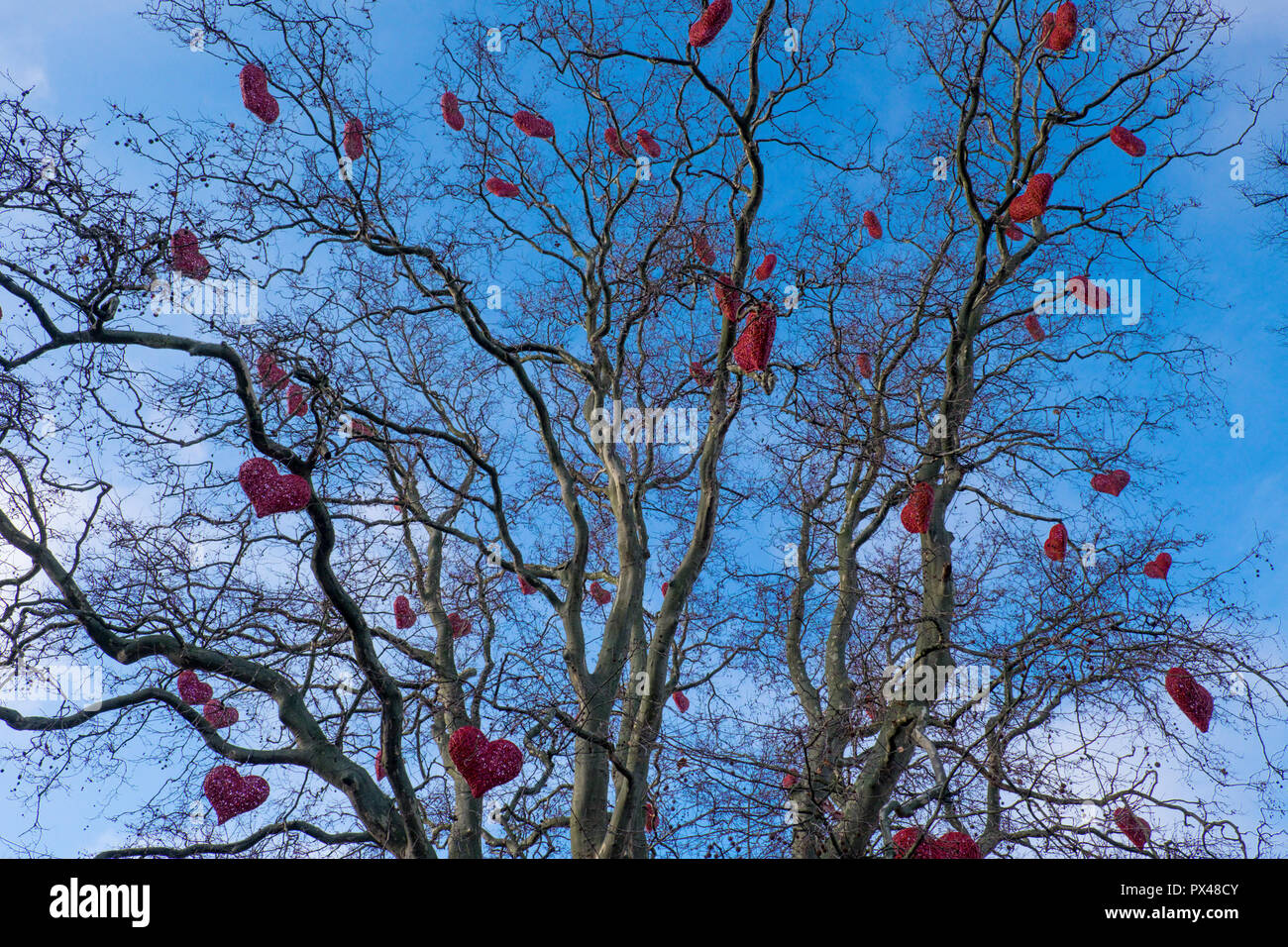 Red love hearts tied in the branches of a tree, Malmo, Sweden - Stock Image