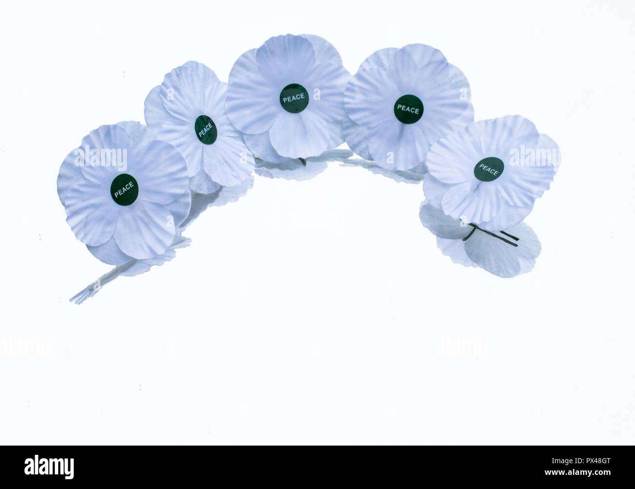 White poppies   remembrance  White peace poppy - Stock Image