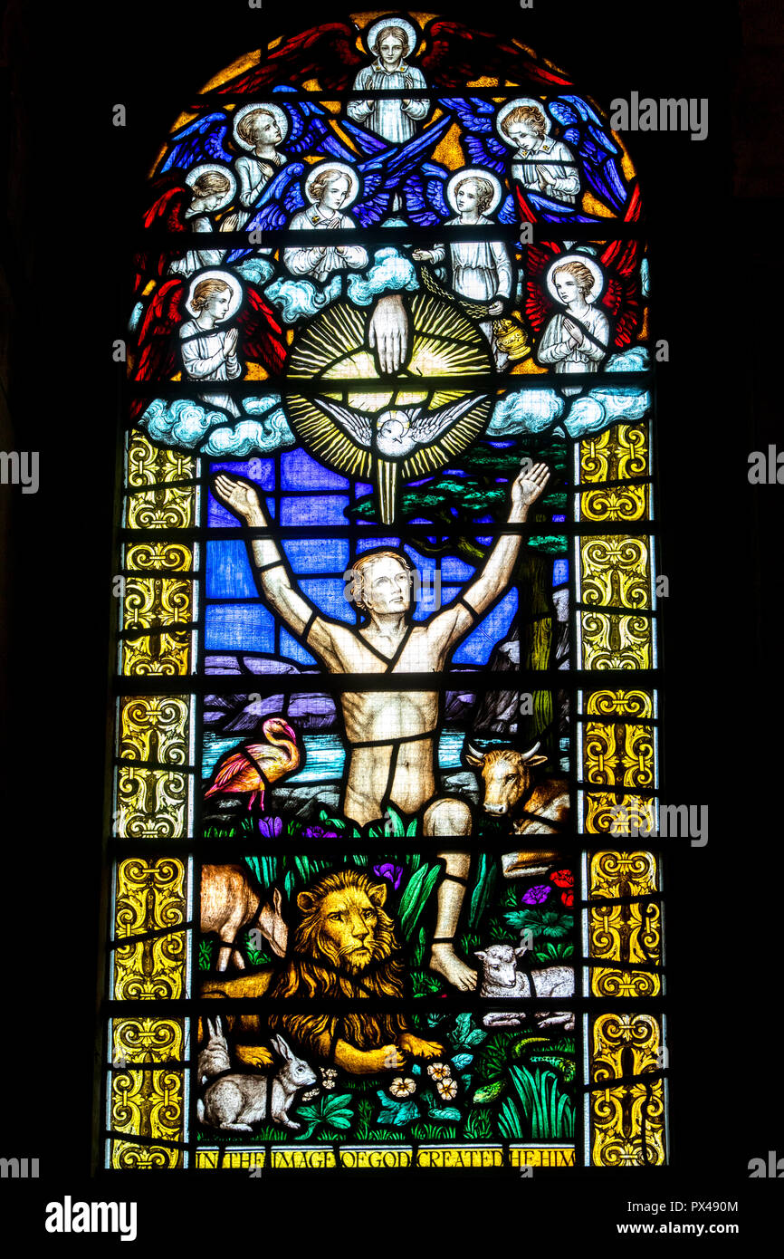 St Ann's Belfast protestant cathedral, Northern Ireland.  Stained glass. Adam. Ulster, U.K. - Stock Image