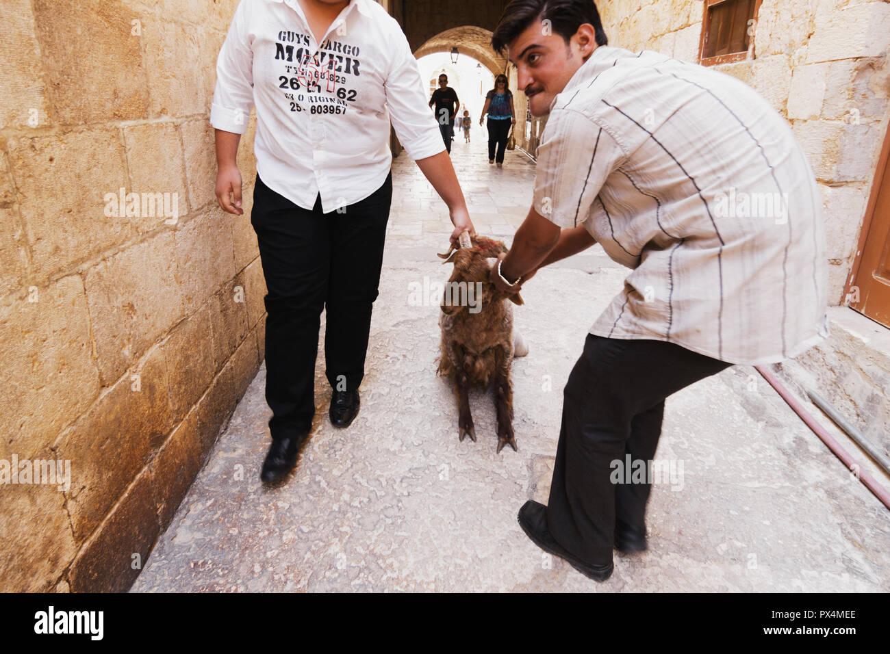 Damascus Goat Stock Photos & Damascus Goat Stock Images - Alamy