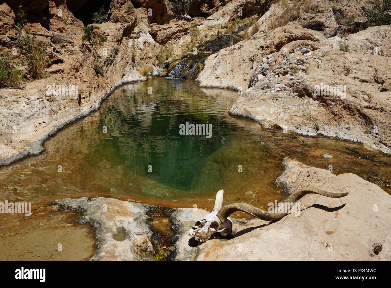 Kuduschädel vor natürlichem Wasserbecken, Naukluft Fluss, Waterkloof Trail, Naukluft Gebirge, Namib-Naukluft Park, Republik Namibia, Afrika Stock Photo