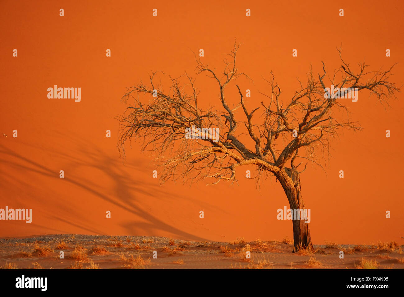 abgestorbener Kameldorn vor Düne 45, Namib-Dünenmeer, Namib Wüste, Sossusvlei-Gebiet, Namibia, Afrika Stock Photo