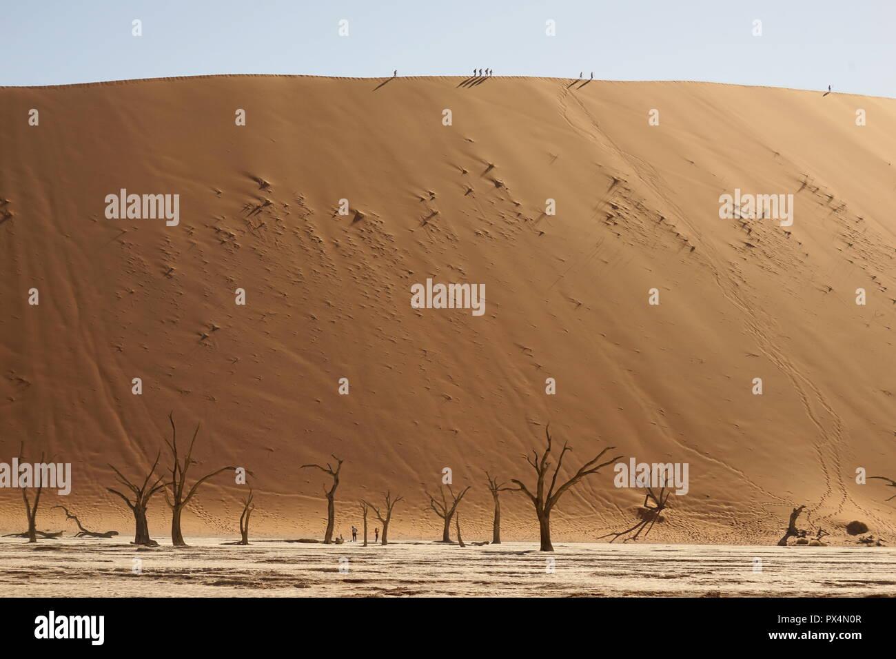 Abgestorbene Kameldornbäume, Dead Vlei, Sossusvlei, Namibia, Afrika - Stock Image