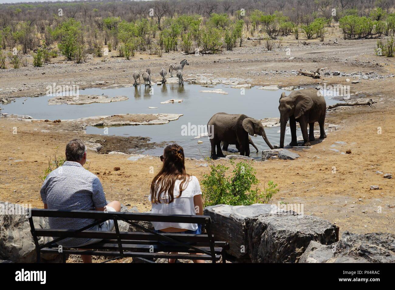 Touristen beobachten Elefanten am Elefanten am Halali Wasserloch, Etosha Nationalpark, Namibia, Afrika - Stock Image