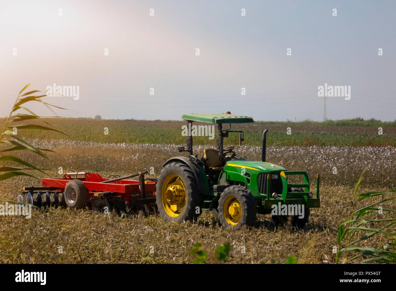 cotton field after harvest with a tractor. - Stock Image