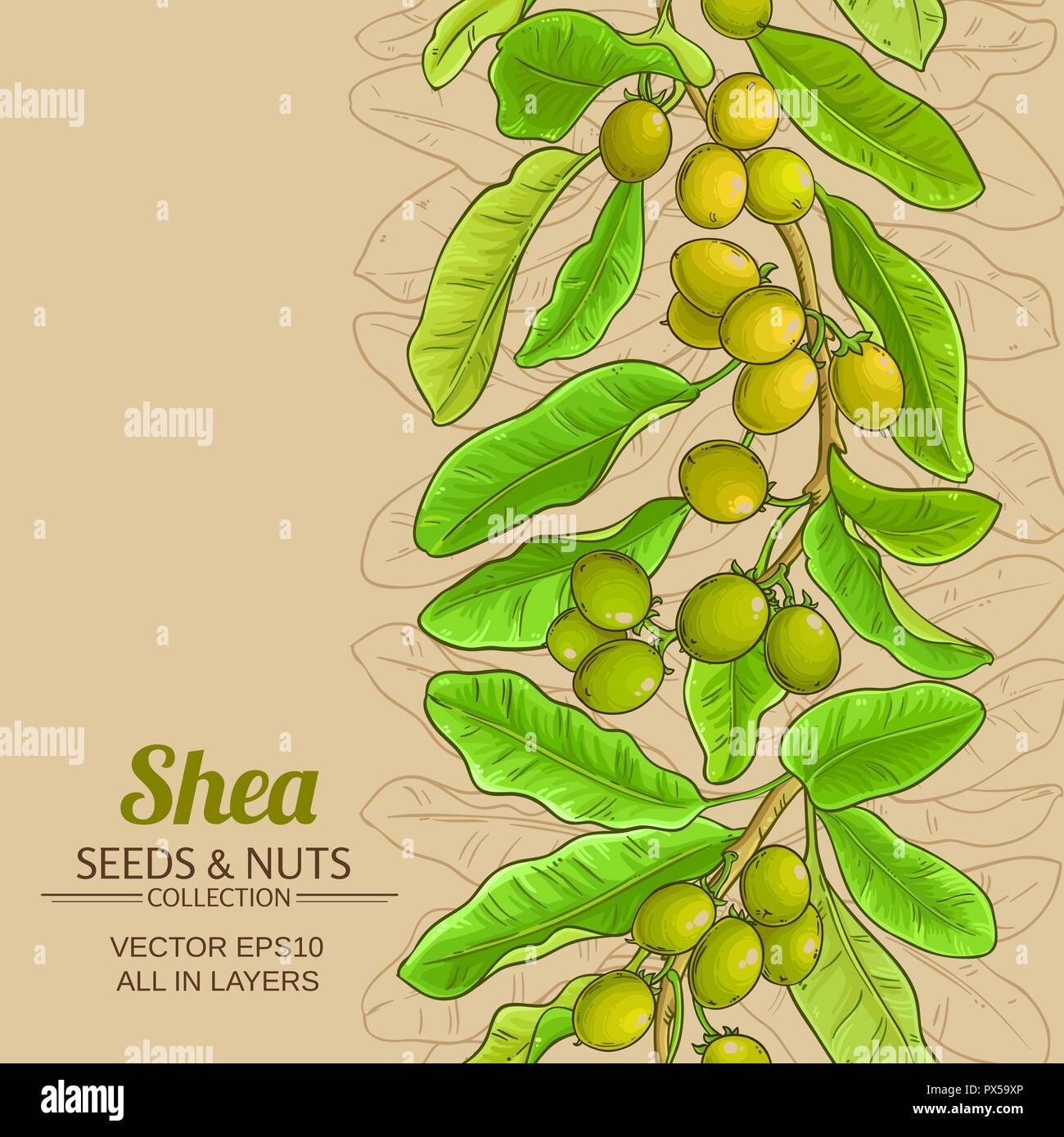 shea vector pattern on color background Stock Vector