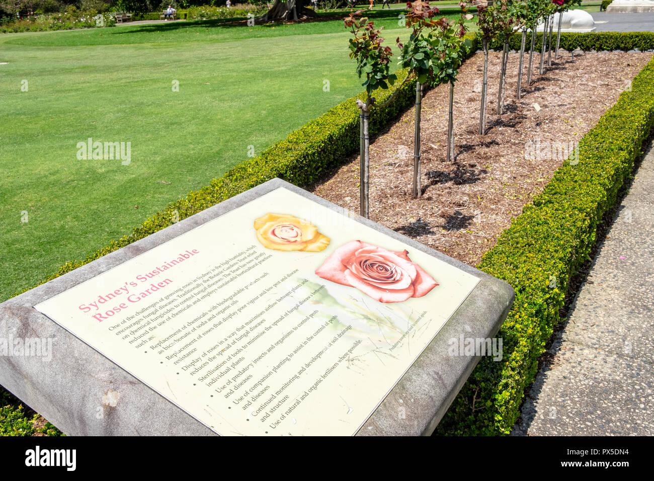 Rose garden in Royal Botanic Gardens in Sydney city centre,Australia - Stock Image