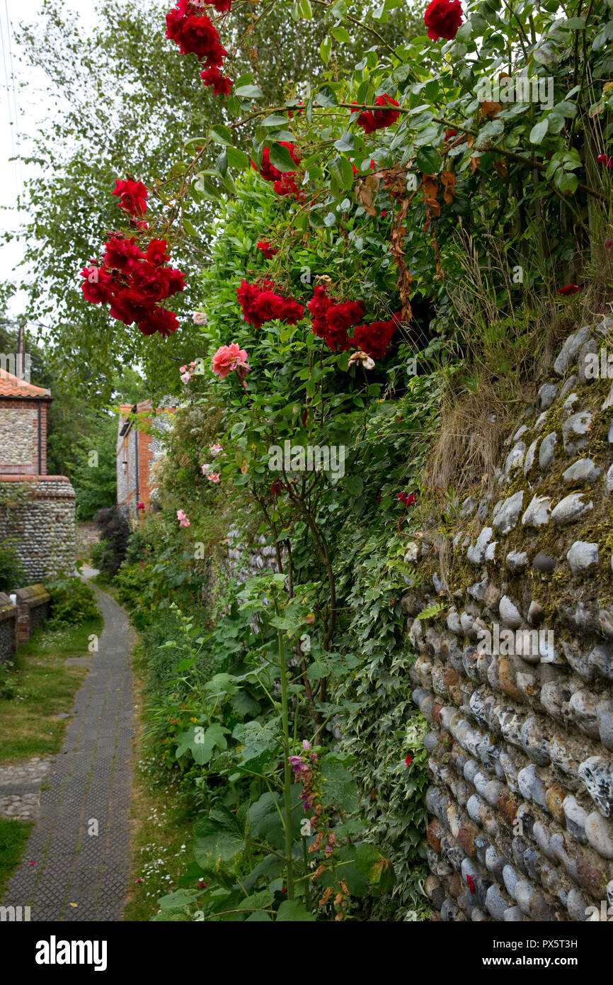Jasmine Terrace: Red Rambling Roses Stock Photos & Red Rambling Roses Stock