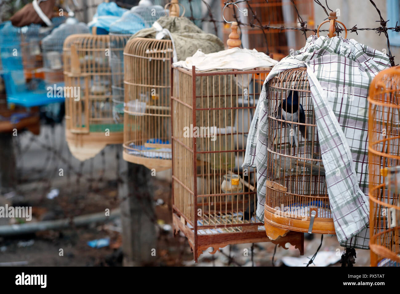 Birds in bamboo cage hanging over sidewalk.  Cai Be. Vietnam. - Stock Image