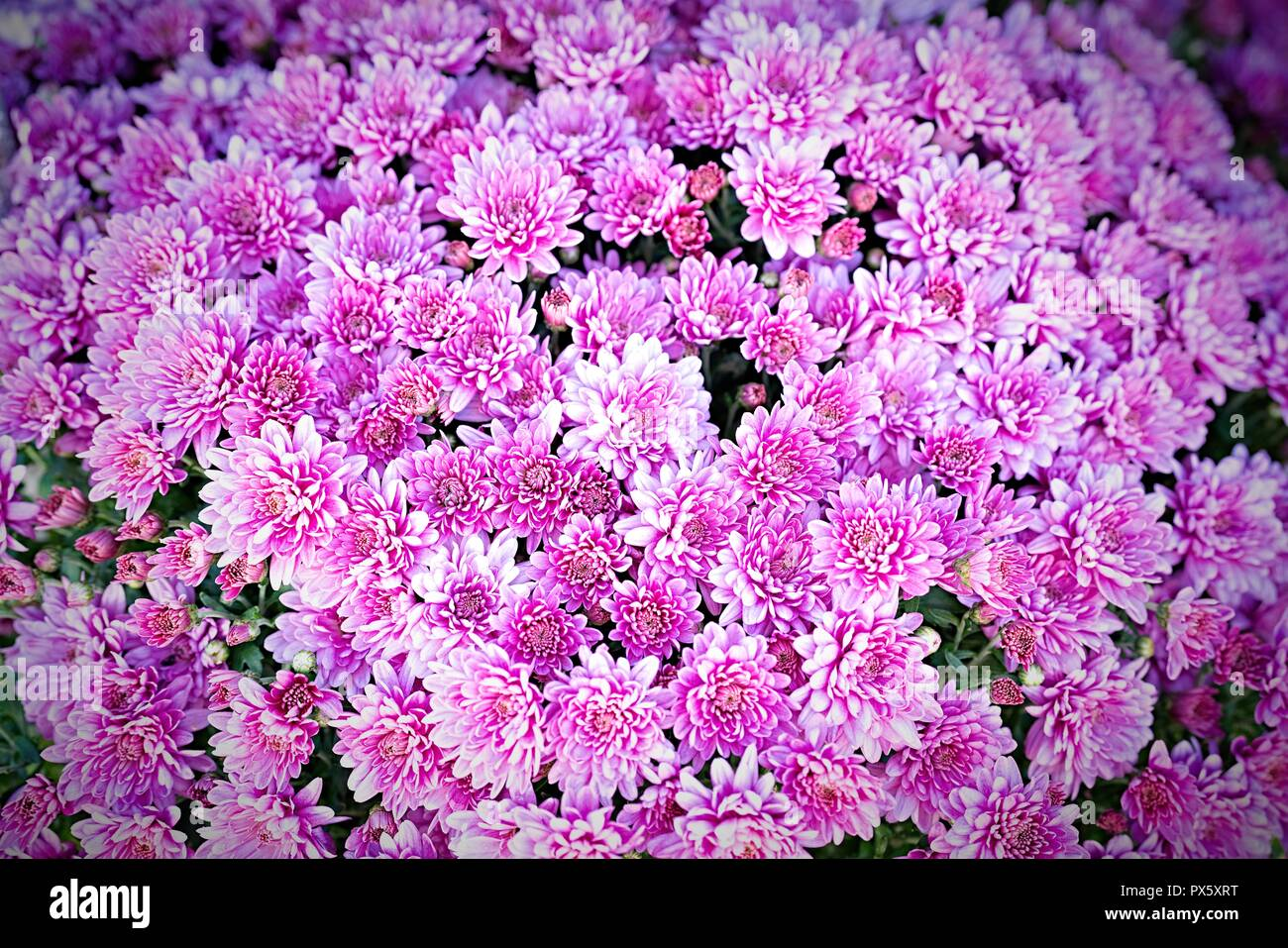 Flowers Wall Background Wedding Decoration Floral Gardening Background With Variety Of Colorful Garden Flowers Stock Photo Alamy