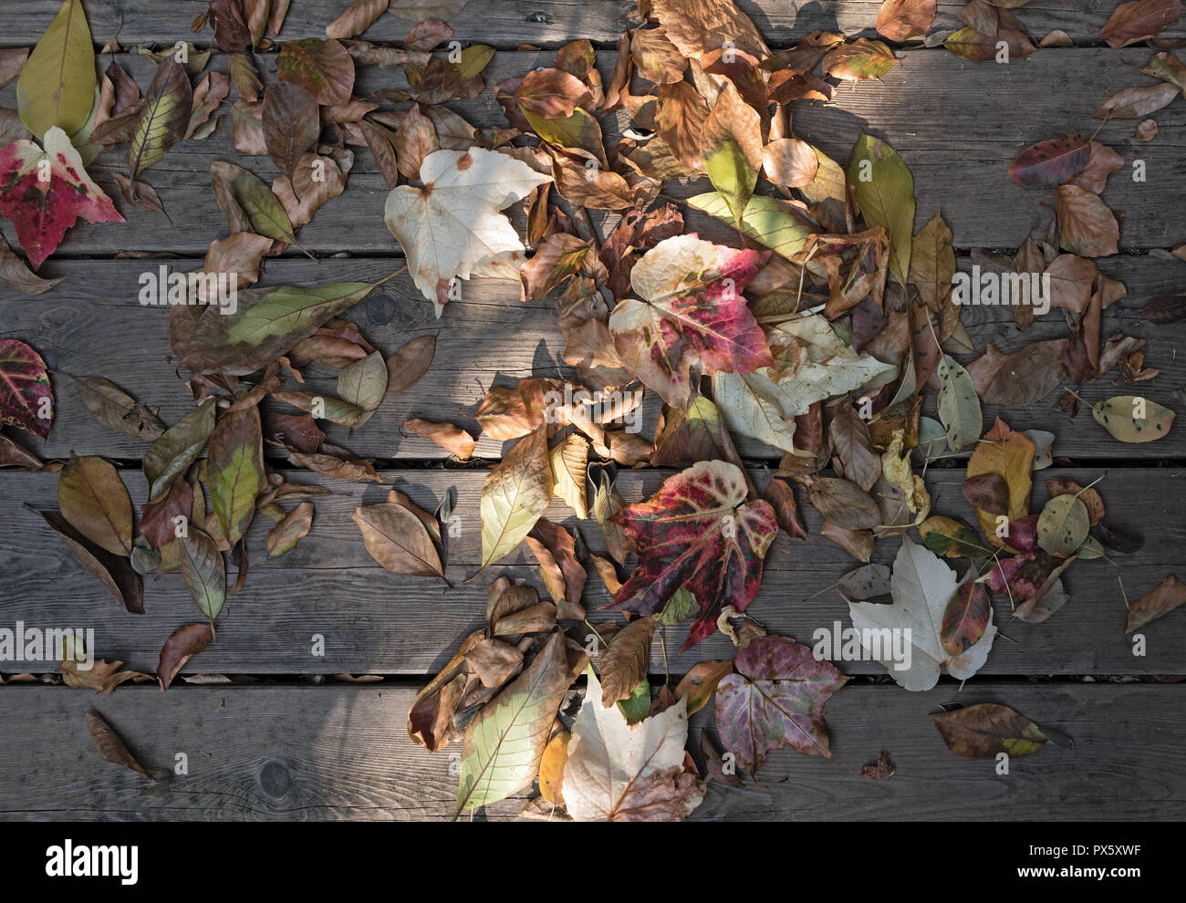 colorful autumn leaves on brown wooden planks. - Stock Image