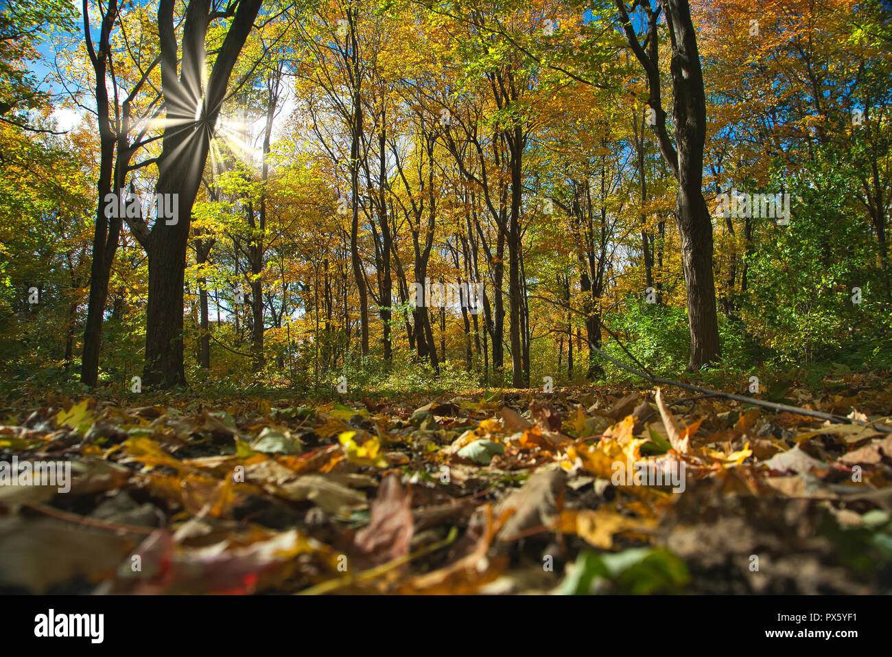 Montreal,Canada,18 October,2018.Autumn scenery in Quebec forest. Credit:Mario Beauregard/Alamy Live News - Stock Image