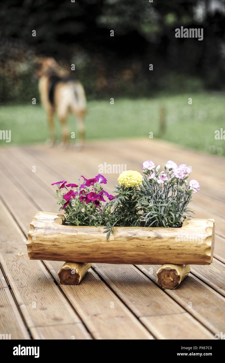 Wooden flower pot, terrace - Stock Image