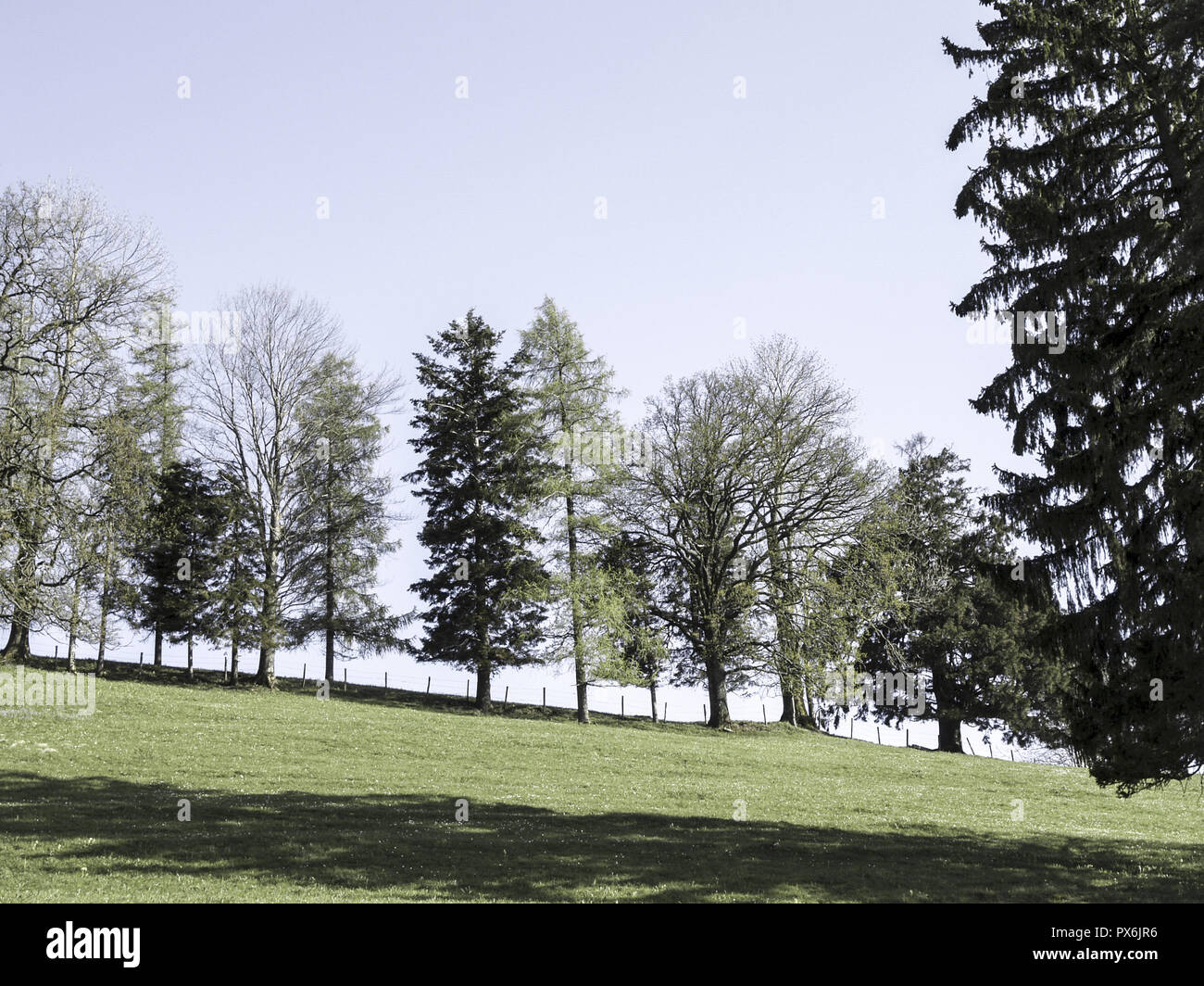 Tree Row Deciduous Trees And Conifers Austria Lower Austria