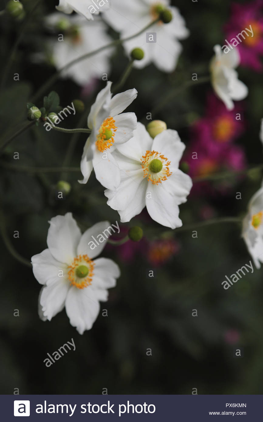 White, yellow and green flowers. - Stock Image
