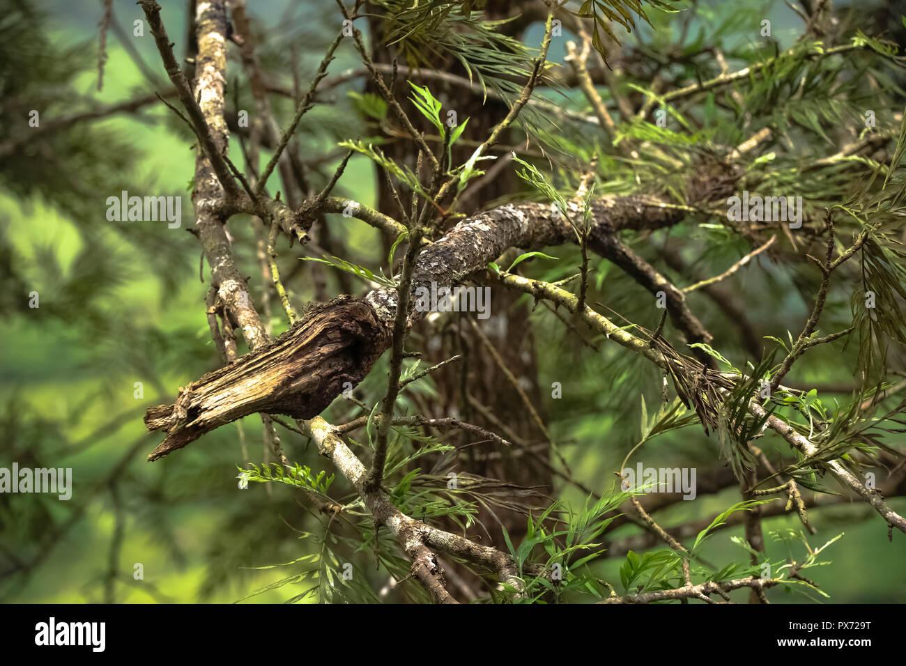 Twig crafts - Stock Image