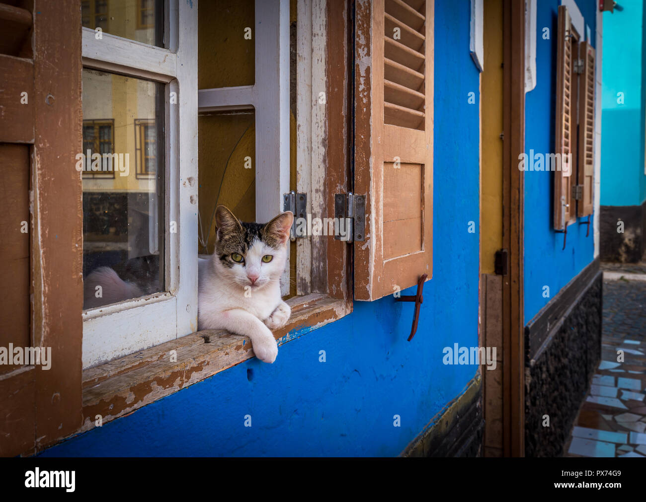 Three color cat lying in the windows of blue house in the streets of African village of Palmeira, island of Sal, Cabo Verde - Stock Image