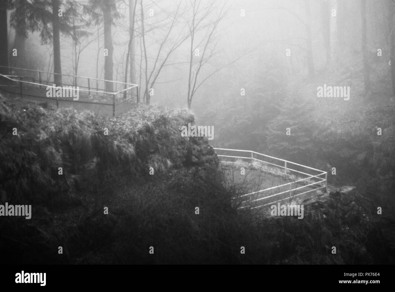Gloomy noon by in the misty mountain forest in the early spring - Stock Image