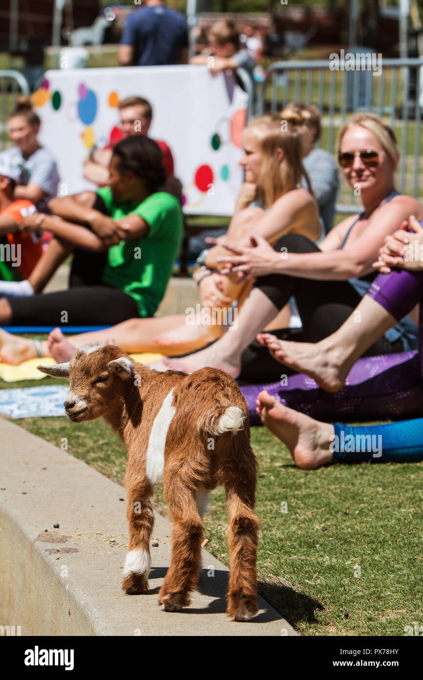 Public Yoga High Resolution Stock Photography And Images Alamy