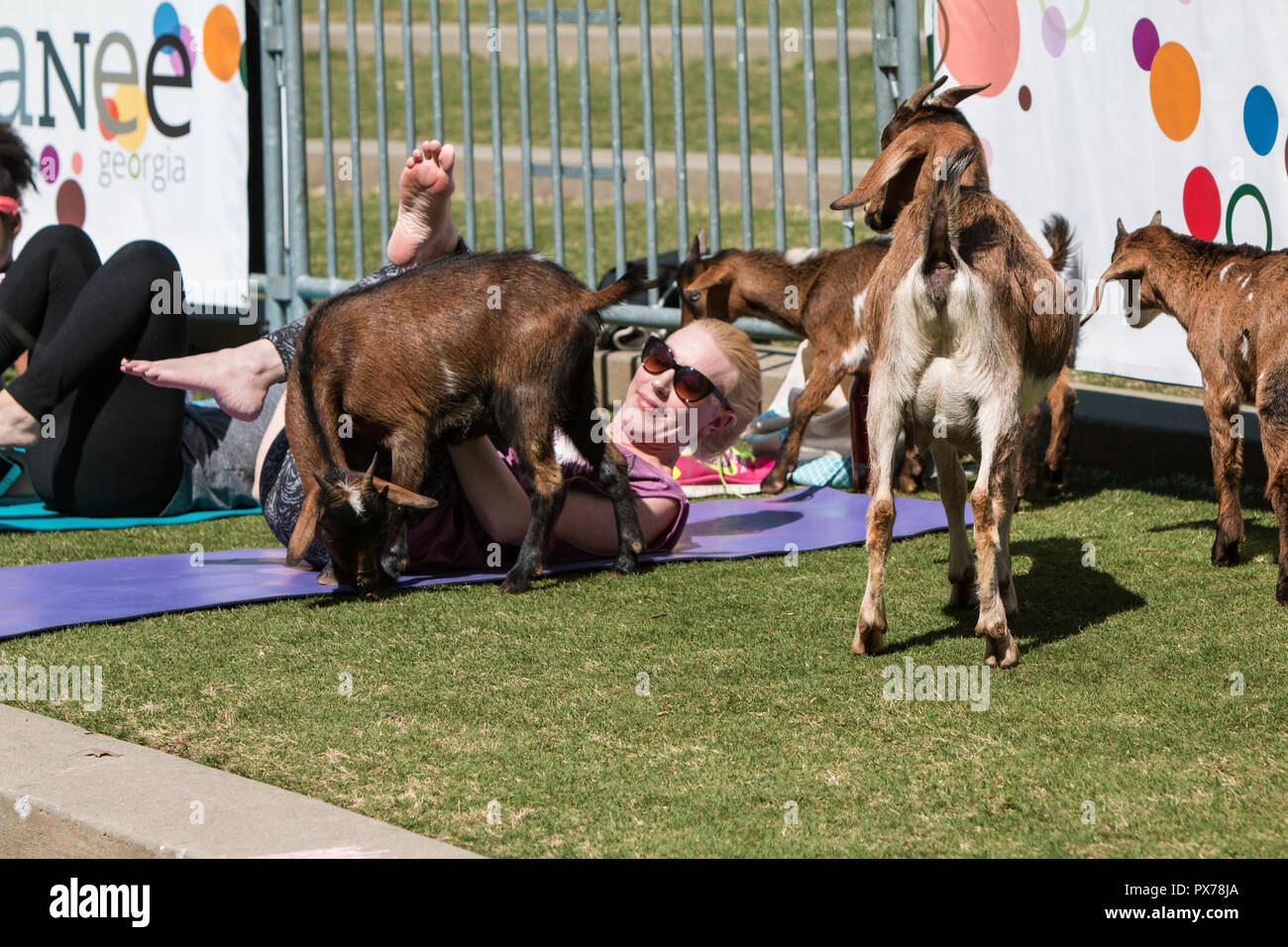Suwanee, GA, USA - April 29, 2018:  Goats gather around a woman stretching in a free goat yoga class at Suwanee Towne Park on April 29, 2018. Stock Photo