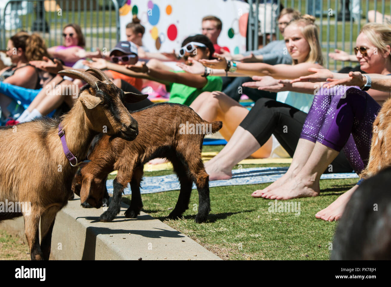 Download Free Images Of Goats Pictures