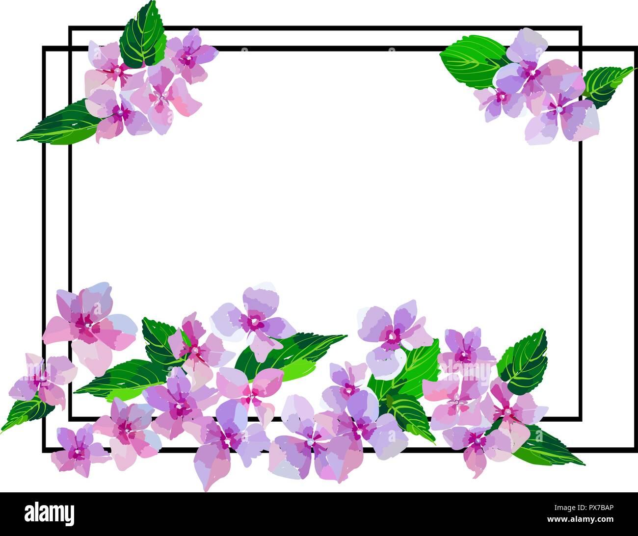 Garden Pink Hydrangea Flowers Botanical Illustration In Hand Drawn