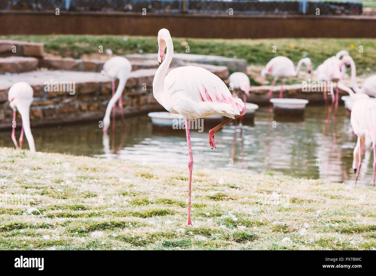 flamingo isolated on white background Stock Photo