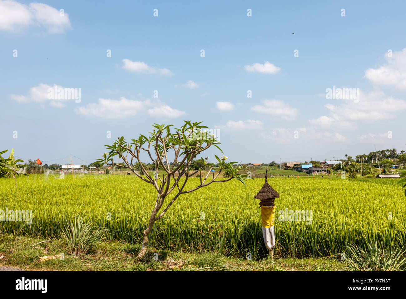 Rice field with reed thatched altar for offerings to Dewi Sri, Balinese Rice Mother. Rural landscape. Bali Island, Indonesia - Stock Image