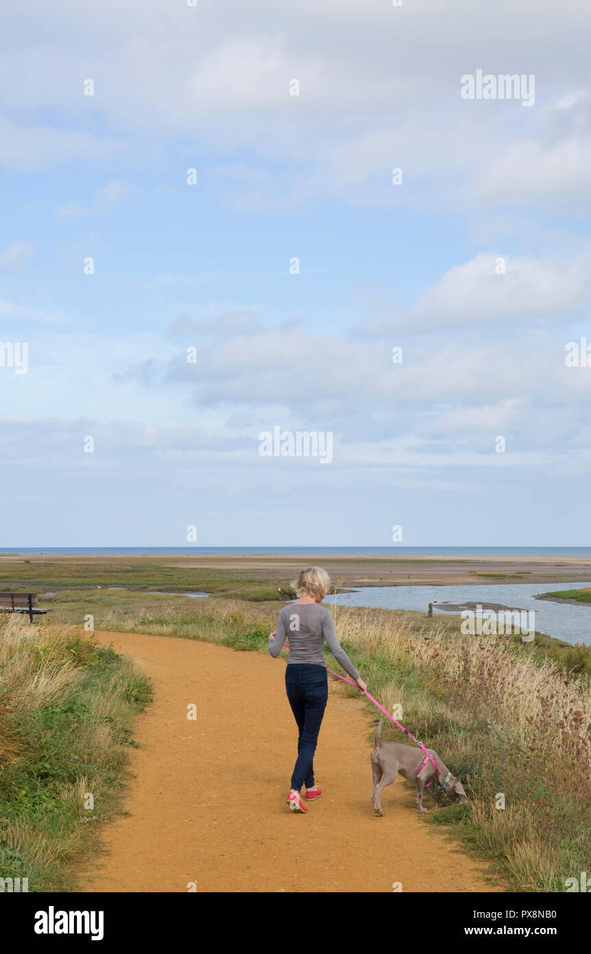 Dog-walking with lead at Thornham, Norfolk, England - Stock Image