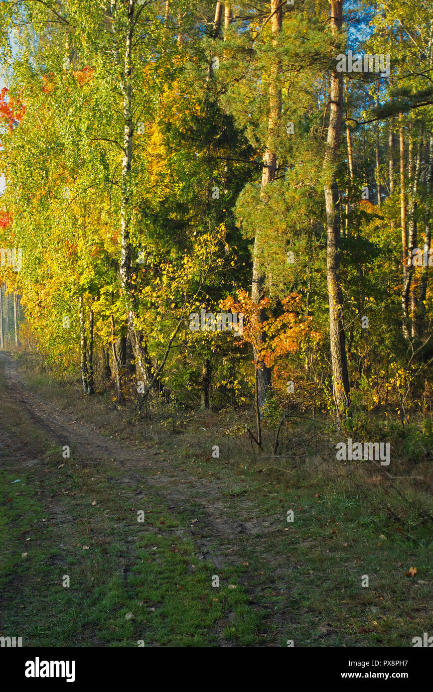 Forest path among trees with colorful leaves, early autumn morning.Vertical view for beautiful ilustration or postcards. - Stock Image