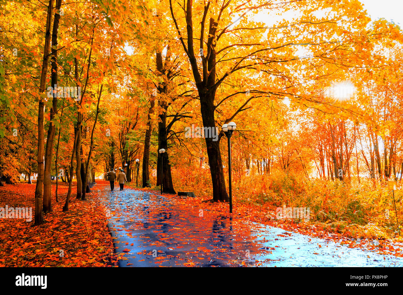 Autumn Landscape Autumn Trees With Yellow Foliage And Autumn Leaves On The Wet Asphalt Road In Park Autumn Alley After Rain Stock Photo Alamy