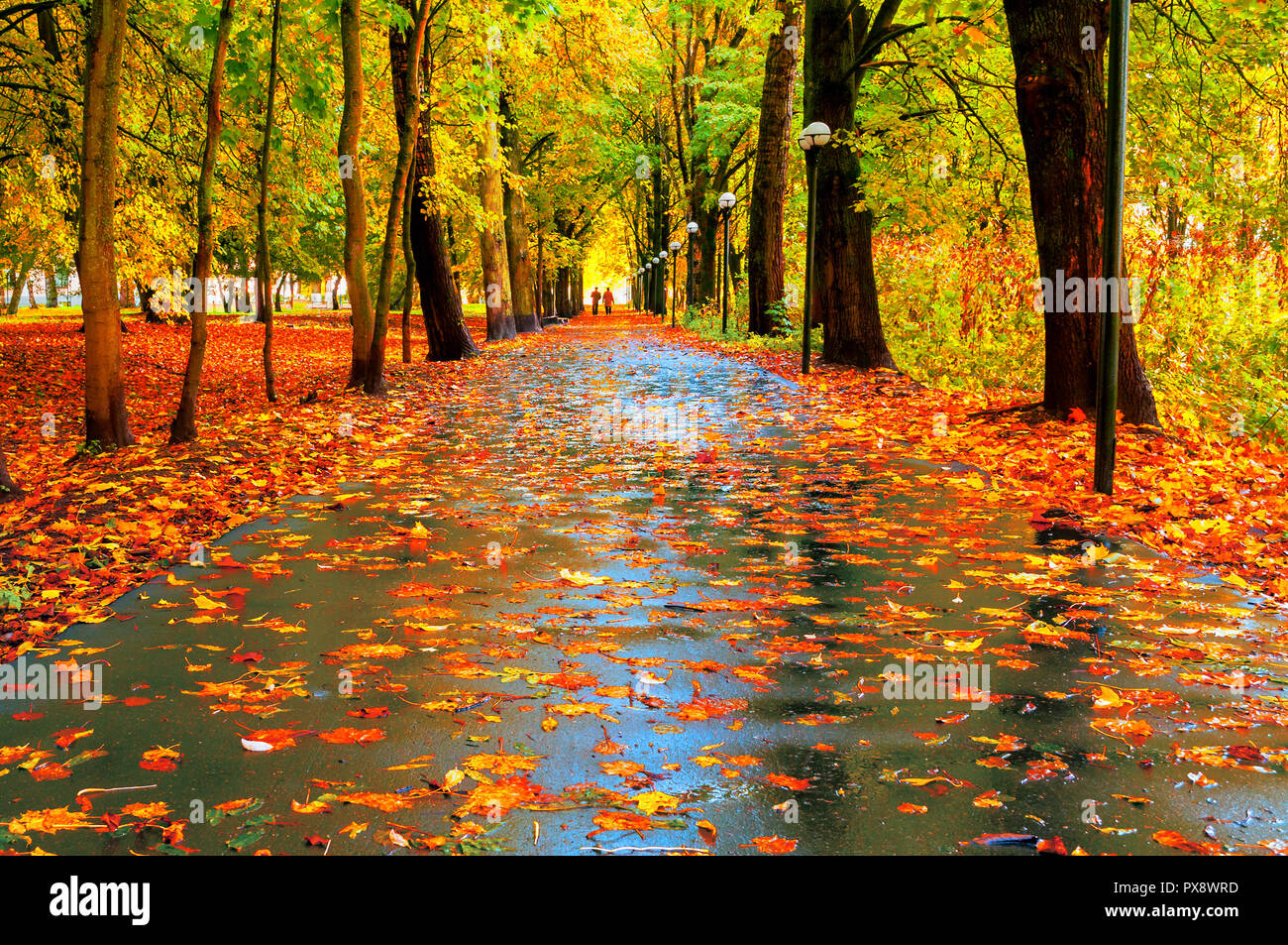 Autumn Colorful Landscape Autumn Trees With Yellow Foliage And Autumn Leaves On The Wet Asphalt Road In Park Autumn Alley After Rain Stock Photo Alamy