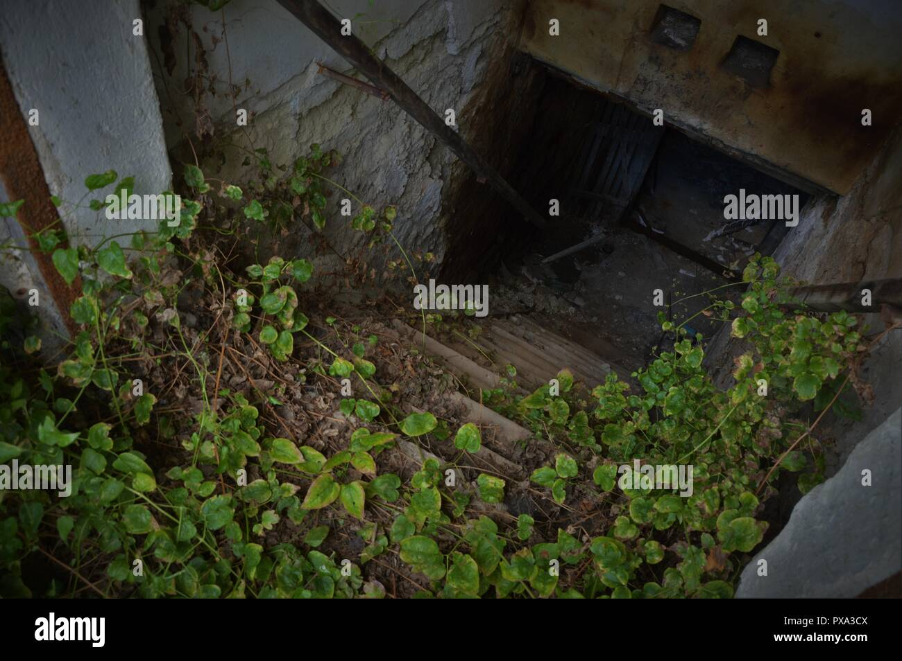 Entry of an abandoned cellar - horroristic scene from above Stock Photo