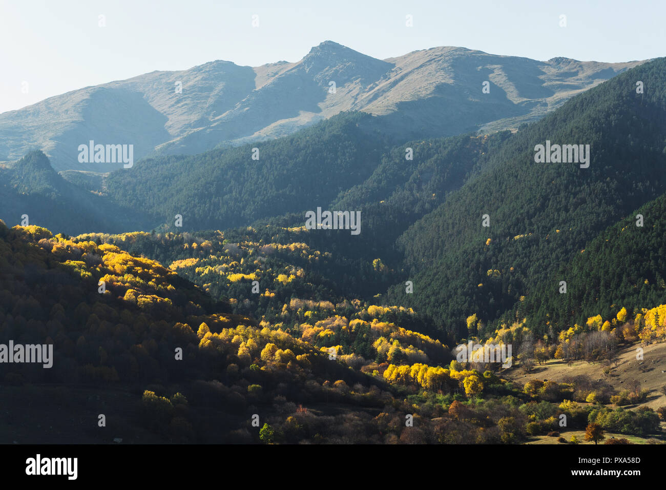 Mountain autumn landscape with colorful forest and high peaks. Epic scene with coniferous and deciduous forest and high peaks. Stock Photo
