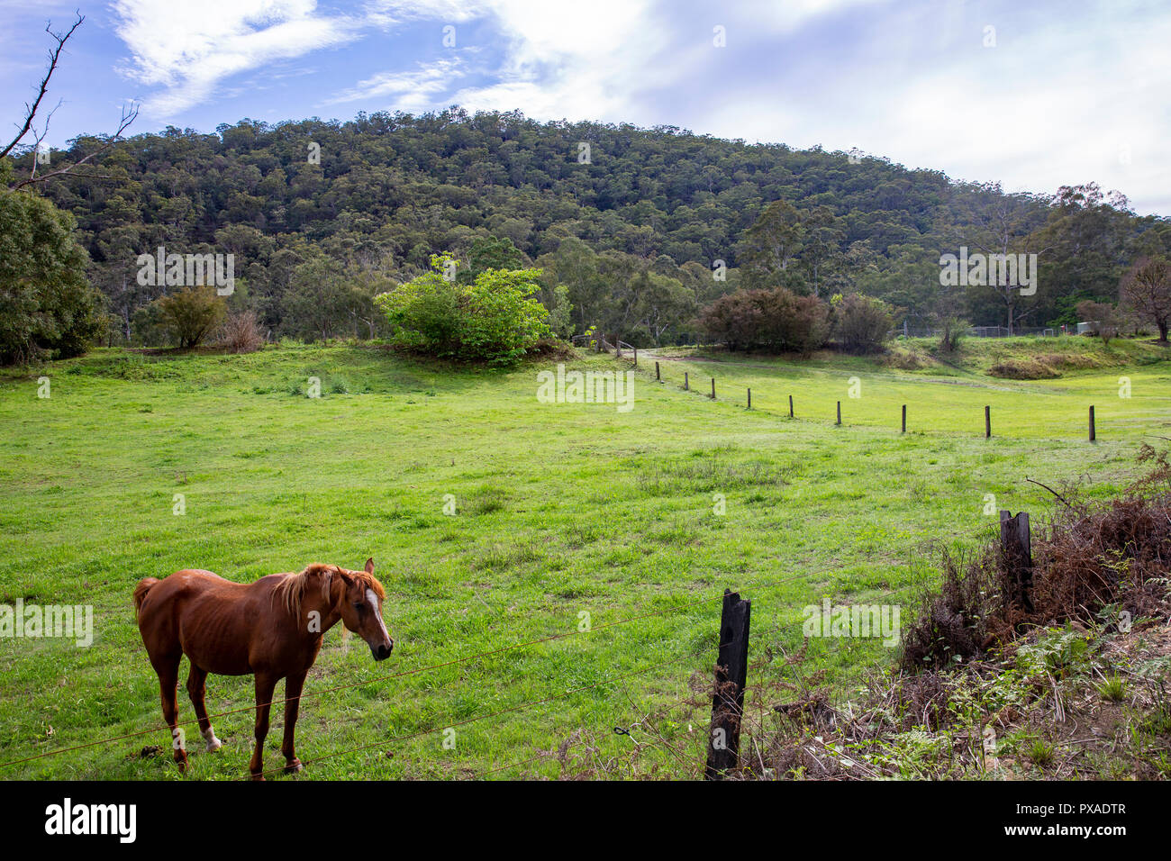 Countryside in Colo , regional New South Wales,Australia - Stock Image