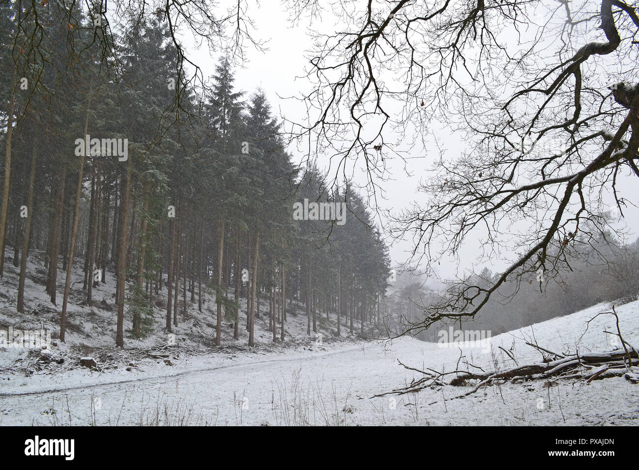 Late March 2018, snowfall on North Downs between Westerham and Chartwell, home of Winston Churchill - Stock Image