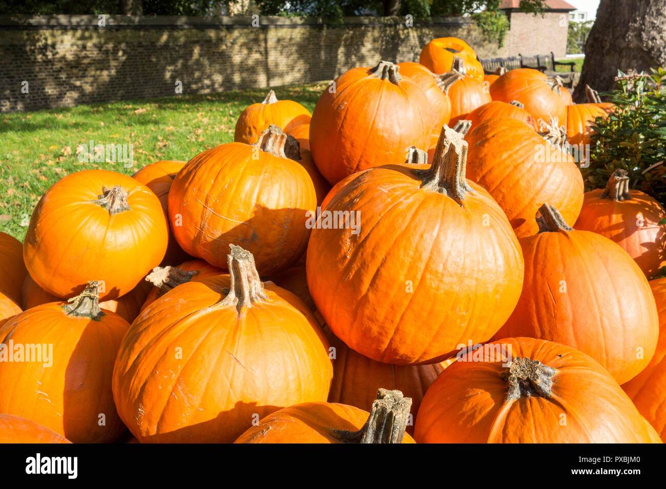 A pile of Halloween antioxidant and nutritious pumpkins ready to be turned into jack-o'-lantern outside a greengrocers in England, UK - Stock Image